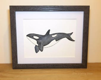 Watercolor Killer Whale painting, ORCA black and white watercolours, FREE delivery, baby nursery, gift idea