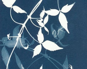 Original Unique Botanical Art Cyanotype Print of Clematis Leaves