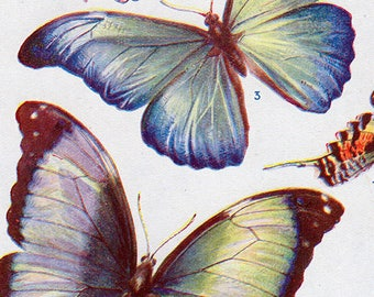 Set of Four Vintage Butterfly Charts #1