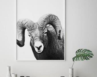 Ram Print, Scandinavian Art, Nordic Print, Deer Wall Art, Sheep Print, Deer Print, Woodland Print, Animal Print, Ram Poster,Wild Animal