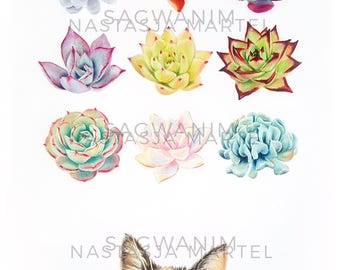 Succulents & Tsumoogi Print