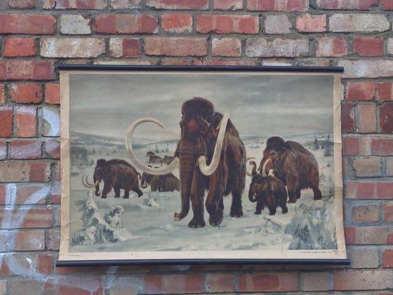 Vintage 1950's Czech School Chart Poster Of A Mammoth By Zedenek Burian