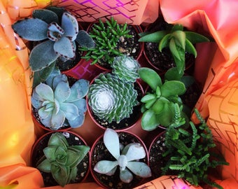 Succulent Gift Box (9)