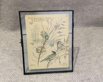 Genuine vintage framed botanical drawing, flower illustrations, botanical print, floral, in glass frame, birds January birthday gift