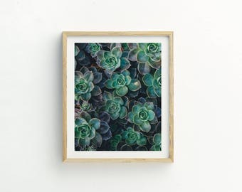Super Succulent Print |  Succulent Printable Art |  Instant Download |  Succulent Photography | Succulent Art | Plant photograph | Cacti Art