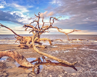 Fine Art Photography, Driftwood Beach, Jekyll Island, Georgia, Golden Isles, Coastal, Beach
