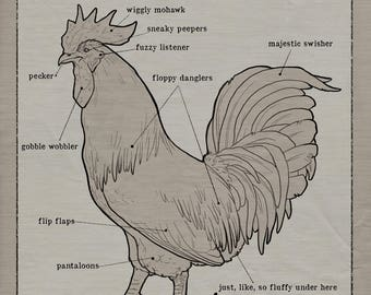 Humorous Anatomy of a Rooster