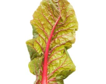 Swiss chard, photographic print
