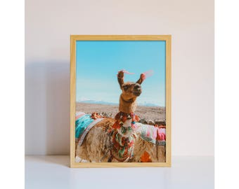 Travel photography llama desert photo Marrakech Morocco Marrakech home decor original photo art print downloadable printable wall art