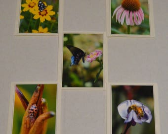 5 Fine Art Pollinators Photo Notecards, Photo Greeting Card, Bees Butterflies & Ladybug Notecards,