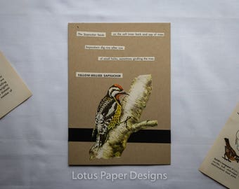 Handmade Blank Greeting Card (Folded A6) - Yellow-Bellied Sapsucker - Golden Guide to BIRDS