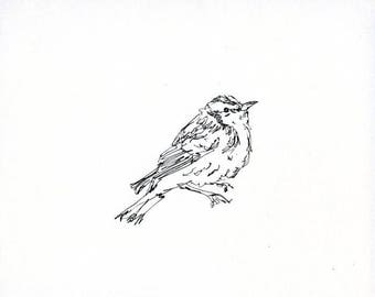 Sketchbook Sale - Bird #10 Original Ink Line Drawing - 8x10 Songbird Original Art