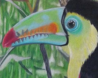 The Toucan - Original Colored Pencil Art