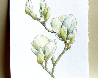 White Magnolia watercolor painting