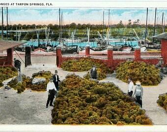 Vintage Florida Postcard - The Sponge Exchange and Sponge Fleet, Tarpon Springs (Unused)