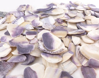 Wampum Quahog Clam Shell Pieces Bulk Lot Crafting Jewelry Making Vase Filler Purple and White
