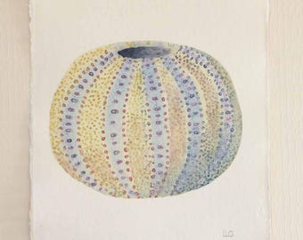 Original watercolour illustration painting of a sea urchin part of a coastal beach ocean seaside set series