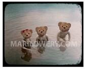 Teddy Bear Art Print, Creepy Cute 8x10 Inch Print, Three Bears Swimming, Collage Print, Anthropomorphic,