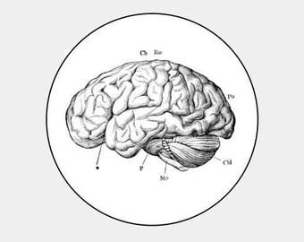 """Brain- 16 white round labels/seals 1.2""""  psychology- science geek"""