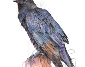 Crow print of watercolor painting, A4 size, C22517, Raven print, Crow watercolor painting print, Raven watercolor painting print, Bird art
