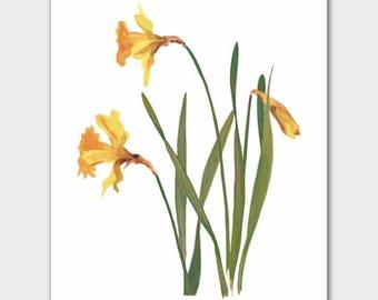 "Daffodils Wall Decor (Yellow Flower Minimalist Art, French Country Chic, Botanical Print) --- ""King Alfred"""
