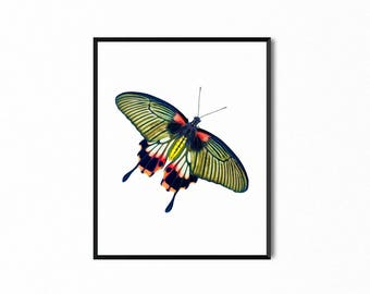 Butterfly Pink, Blue, Yellow Printable, Wall Art, Nature Print, Art Print, Digital Print