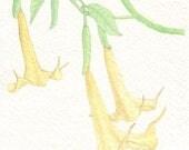 Angel Trumpet Card