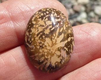 Starburst Jasper / Rhyolite Cabochon  (25X18X5)