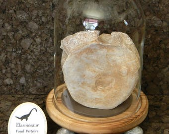 Huge & Amazing Elasmosaurus Vertebra. Authentic Aquatic Dinosaur Fossil Bone in Bell Jar Display Dome. Custom Cloche Dinosaur Fossil Display