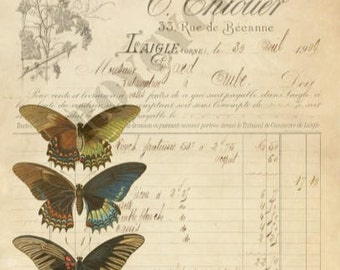 Butterfly Ephemera