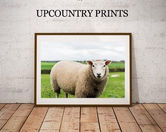 Sheep Photograph Print, Baby Sheep, Baby Lamb, Farm Animal Art, Farm Lamb, Nursery Lamb Art, Nursery Print, Nursery Art, Baby Farm Animals