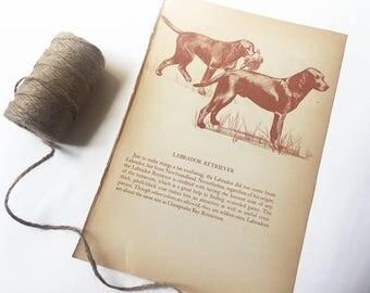 1945 LABRADOR RETRIEVER PRINT - Vintage Illustration, Rustic Decor, Farmhouse, Wall Decor, Breed, Dog Lover Gift, Black Lab, Yellow Lab