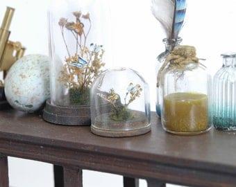 Butterflies under Glass Dome  - 1/12th dollshouse miniature entomology