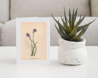 Wild Chives-Pkg of 6 Cards With Envelopes-Vintage Card -Any Occasion Card-Everyday Card-Collector Art Cards