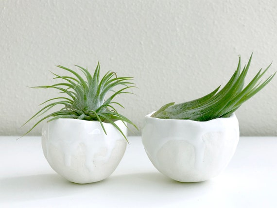 White Drippy Porcelain Planter with Air Plant