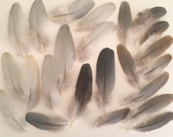 Lot of 24 Natural Gray / Brown feathers