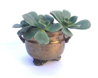 Small Brass Bowl -- Tiny Brass Bowl -- Brass Claw Foot Bowl -- Small Bowl Brass -- Brass Small Planter -- Small Planter -- Small Cacti Bowl
