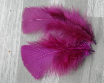 Set of 20 Eggplant Turkey feathers
