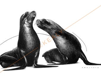 Sea Lions Drawing Print – Black and White