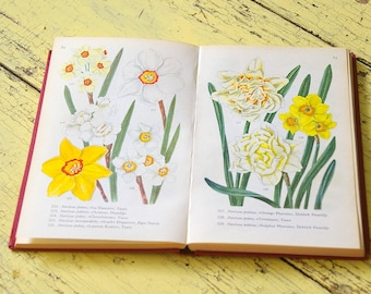 Vintage flower book guide houseplants.Vintage flower guide. Floral guide.Vintage flower illustrations.Book pages.collage pages prints