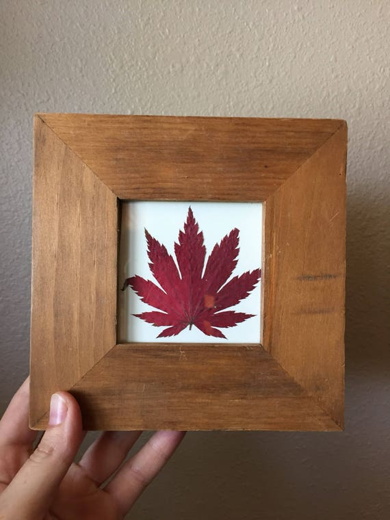 Japanese Maple Herbarium - Fall Foliage- Red Maple Leaf Framed- Plant Art- Pressed Botanical- Botanical Decor- Wood Framed -Small Framed Art