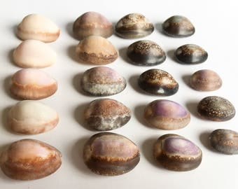 Small Cowrie Shells Etsy