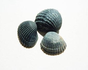 Set of 3 black shells for decoration