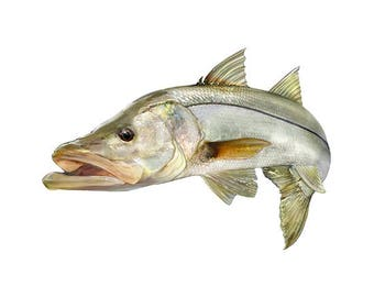 Jumping Snook Decal - Sticker