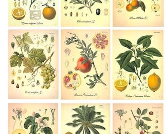 Digital Image Botanical-6 Cards - Digital collage sheet, Printable Download, Digital Tags, Digital Vintage, ATC Card, Vintage Cards