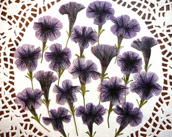 Dried pressed flowers, real dried petunia flowers 20 pcs.