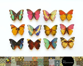 Butterfly Fridge Magnet 12pc Set