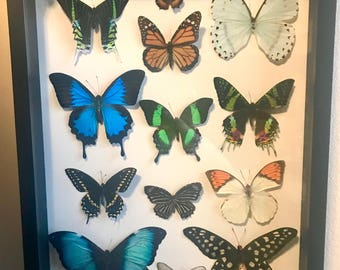 Mixed Butterfly Framed Display