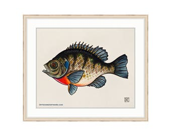 "Bluegill Giclee Print of a Watercolor Painting 8""x10"" for the Freshwater Angler. Sunfish. Bream. Brim Fish. LCopper Nose Fish. Lake Fishing."