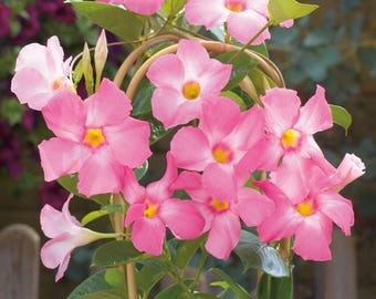 Flowering Vine Etsy